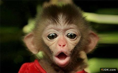 میمون ناز و زیبا