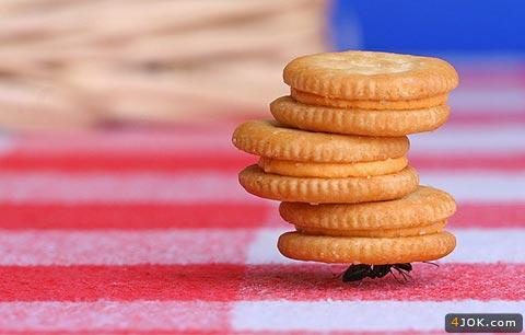 مسابقات قویترین مورچه دنیا