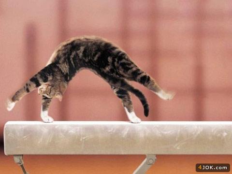 به به ، اینم گربه ژیمناست کار