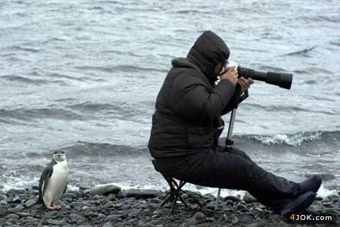 ای بابا پس این پنگونه کوش ؟