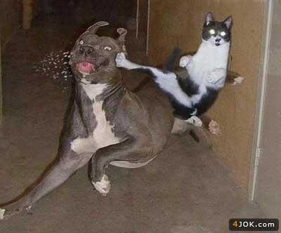 و این است گربه ی شجاع