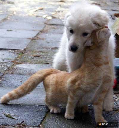 جا داره ما آدما از این سگ و گربه درس بگیریم ، حیوونا هم آدم شدن !