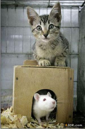 اینم عکس یادگاری از موش و گربه باهوش