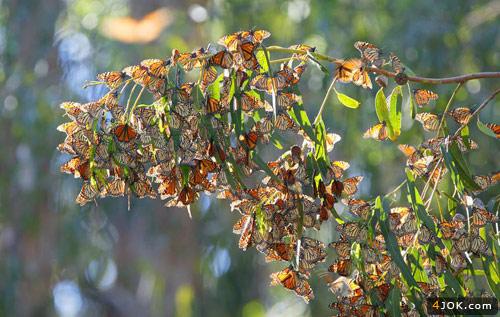 عکس جالبی از پروانه ها و طبیعت سبز