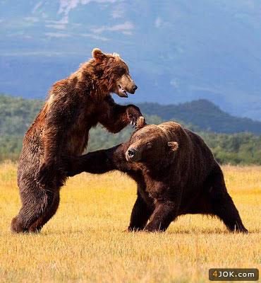 کشتی کج آزاد 2 خرس در 65 کیلومتری هالیوود