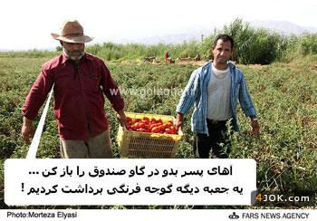 کمبود گوجه و گرونی قیمت ....