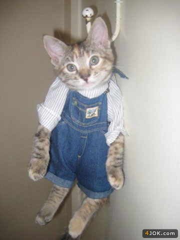 گربه آقا