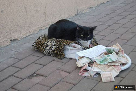 گربه متکدی