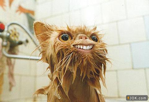 گربه : فکر کنم آبش برق داشت ، موهام سیخ شد