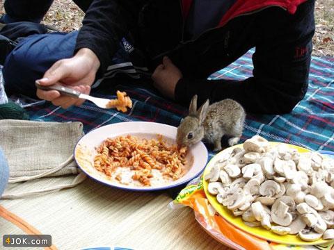 عکس زیبای علاقه خرگوش جنگلی به ماکارونی
