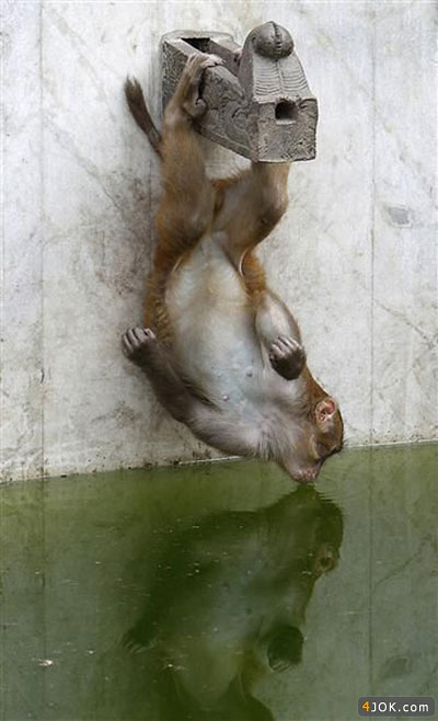 میمون : آب معدنی که نمیدن ، مجبوریم از این آب بخوریم ! 2 هفتس حموم هم نرفتم .