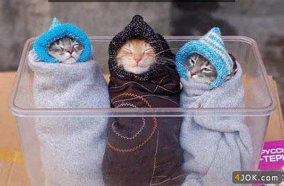 گربه اولی : ما کی به دنیا اومدیم ، مامانمون چی شد ؟ مامااااااااان ....